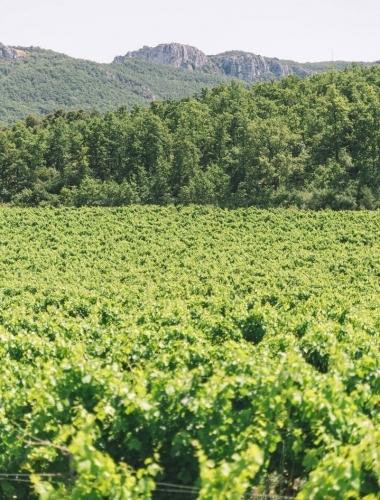 Domaine-Vaison-la-Romaine-2